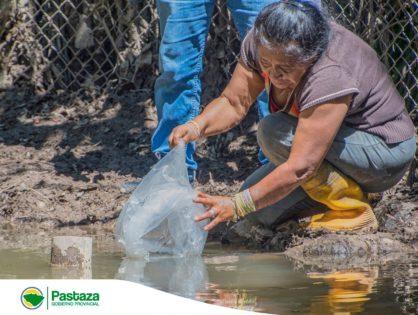 GADPPz realiza la entrega de 24.990 alevines de tilapia en los sectores Puyupungo y Chinchayaku