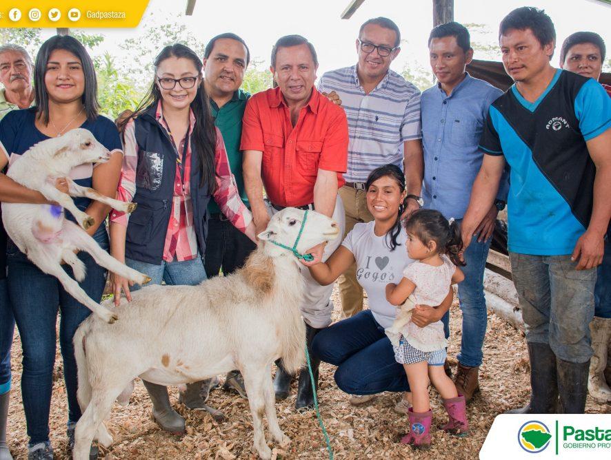 Prefecto de Pastaza, Jaime Guevara, hizo la entrega de 88 ovinos de las razas Catadín y Dorper.