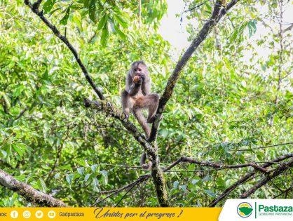 Animales del Centro de Rescate y Rehabilitación de Fauna Silvestre Pastaza Selva Viva del GADPPz, reciben el cuidado y alimentación necesaria!