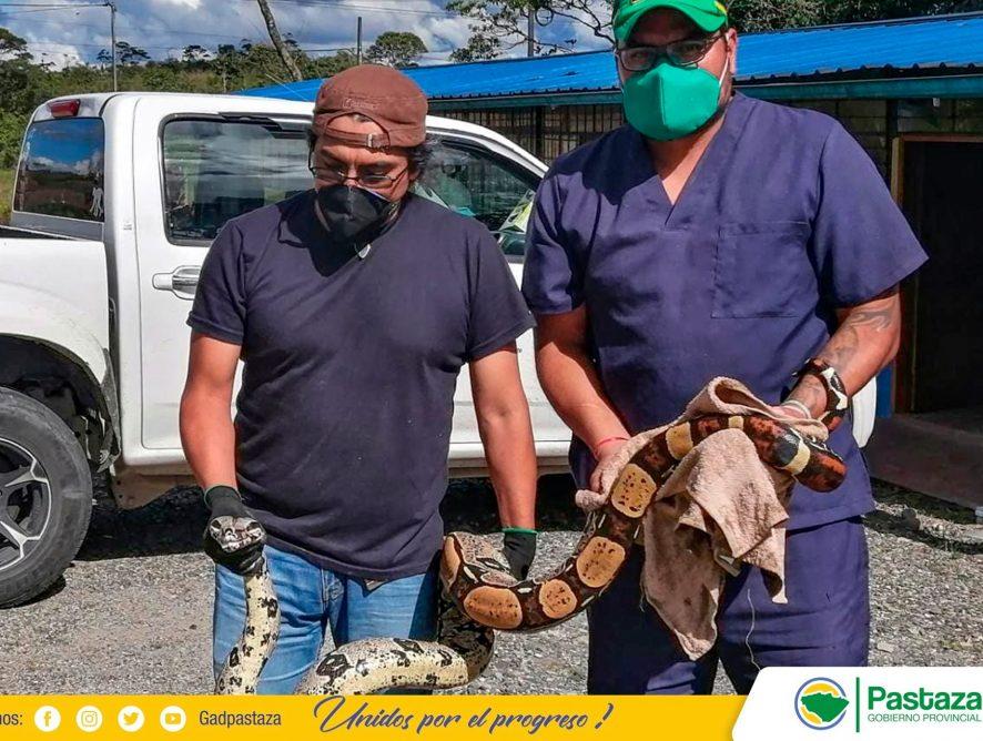 Dos animales silvestres, rescatados, fueron entregados al Centro de Rescate.