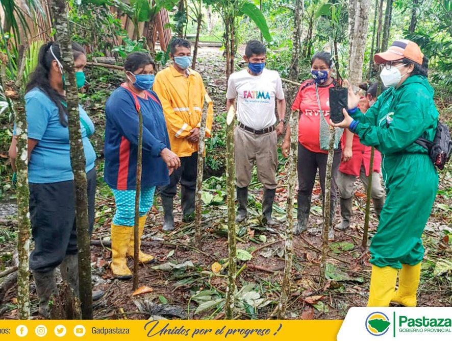 Reactivamos el proyecto del cultivo de la vainilla en Pastaza.