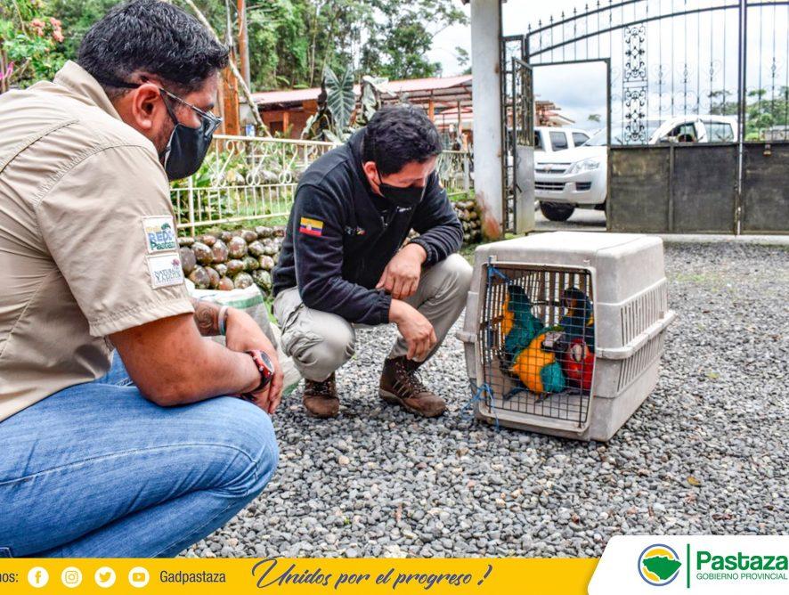Dirección de Gestión Ambiental de la Prefectura de Pastaza reubicó 8 animales silvestres.