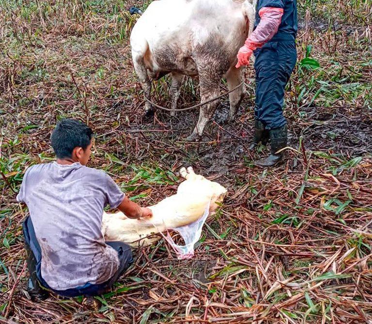 Técnicos de nuestra institución atendieron emergencia veterinaria en el Triunfo!