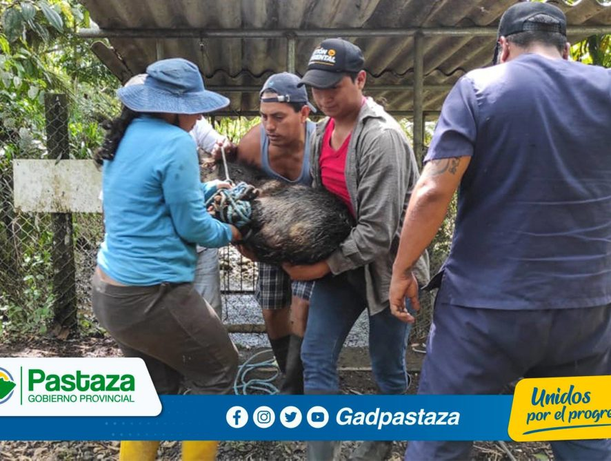¡Nueve animales silvestres fueron trasladados al Descanso Iwia!