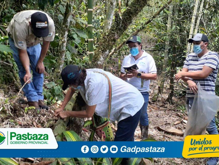 ¡Se realizó identificación taxonómica del bambú en Pindo Mirador!