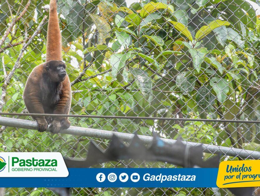 Agrocalidad inspeccionó el Centro de Rescate y Rehabilitación Pastaza Selva Viva para otorgar el Registro Sanitario.