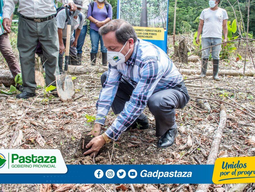 Impulsamos la producción de la balsa con fines comerciales para mejorar la economía del sector rural de #Pastaza