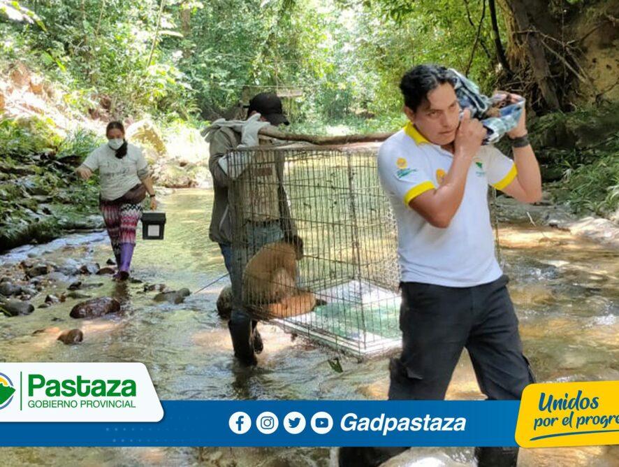 ¡Monos chorongos fueron trasladados al Bosque Protector Selva Viva!