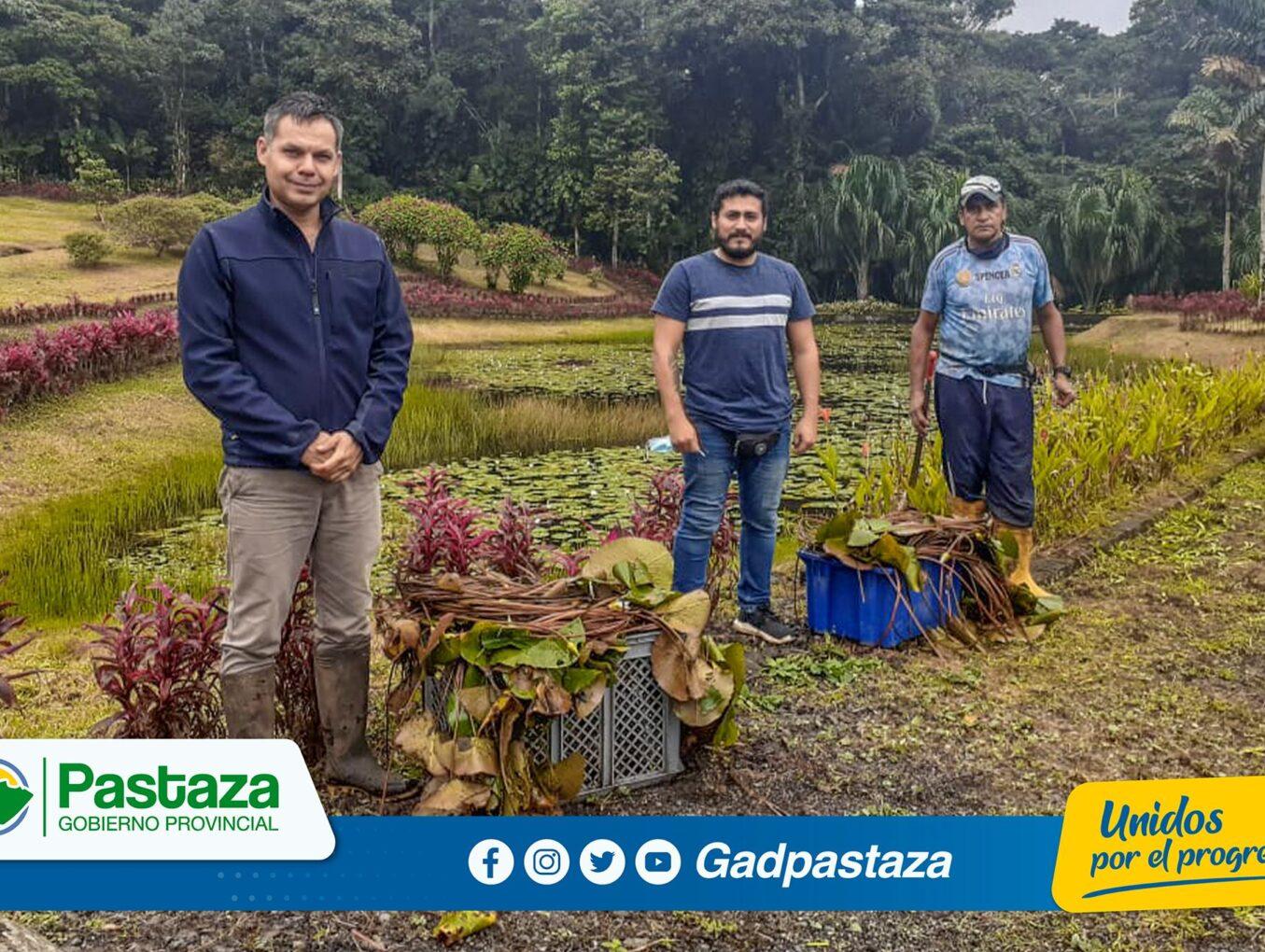 ¡Plantas acuáticas serán implementadas en las lagunas de Pindo Mirador!