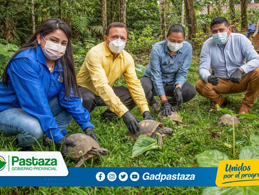 En el Pindo se realizó la liberación de tortugas motelo conjuntamente con el MAAE!