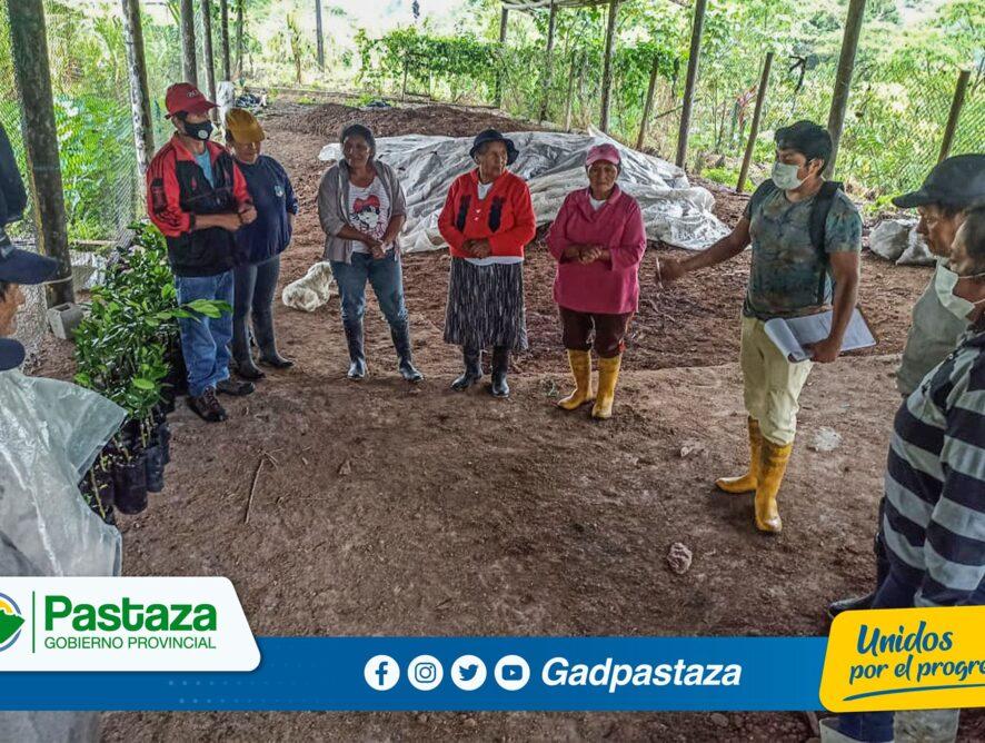 ¡Familias de las Las Peñas y El Talín recibieron plantas de cítricos!