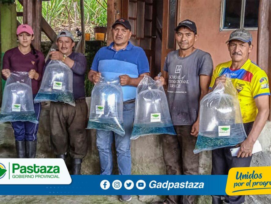 ¡Continuamos entregando alevines de tilapia  en toda la provincia!