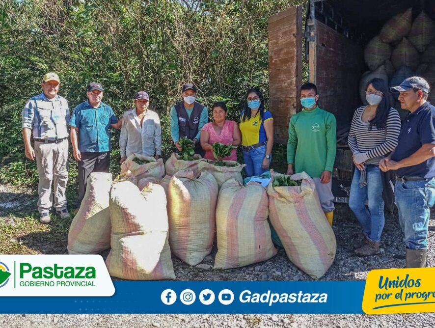 ¡Apoyamos en la comercialización a productores de guayusa!