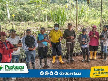 ¡Continuamos entregando plantas de balsa en varios sectores de Pastaza!