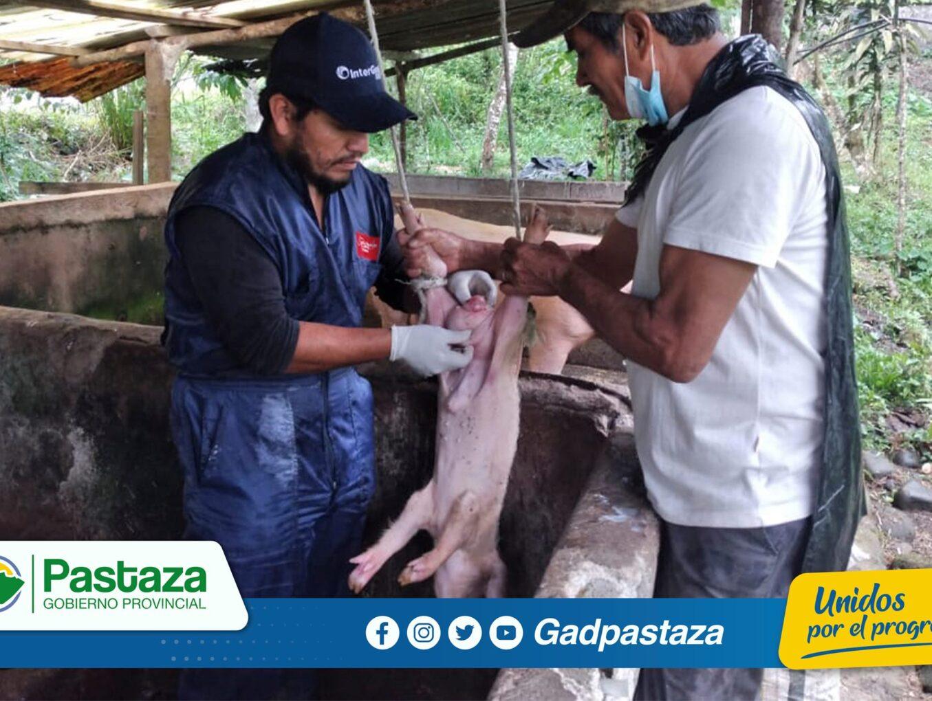 ¡Emergencias veterinarias una prioridad de la Prefectura de Pastaza!